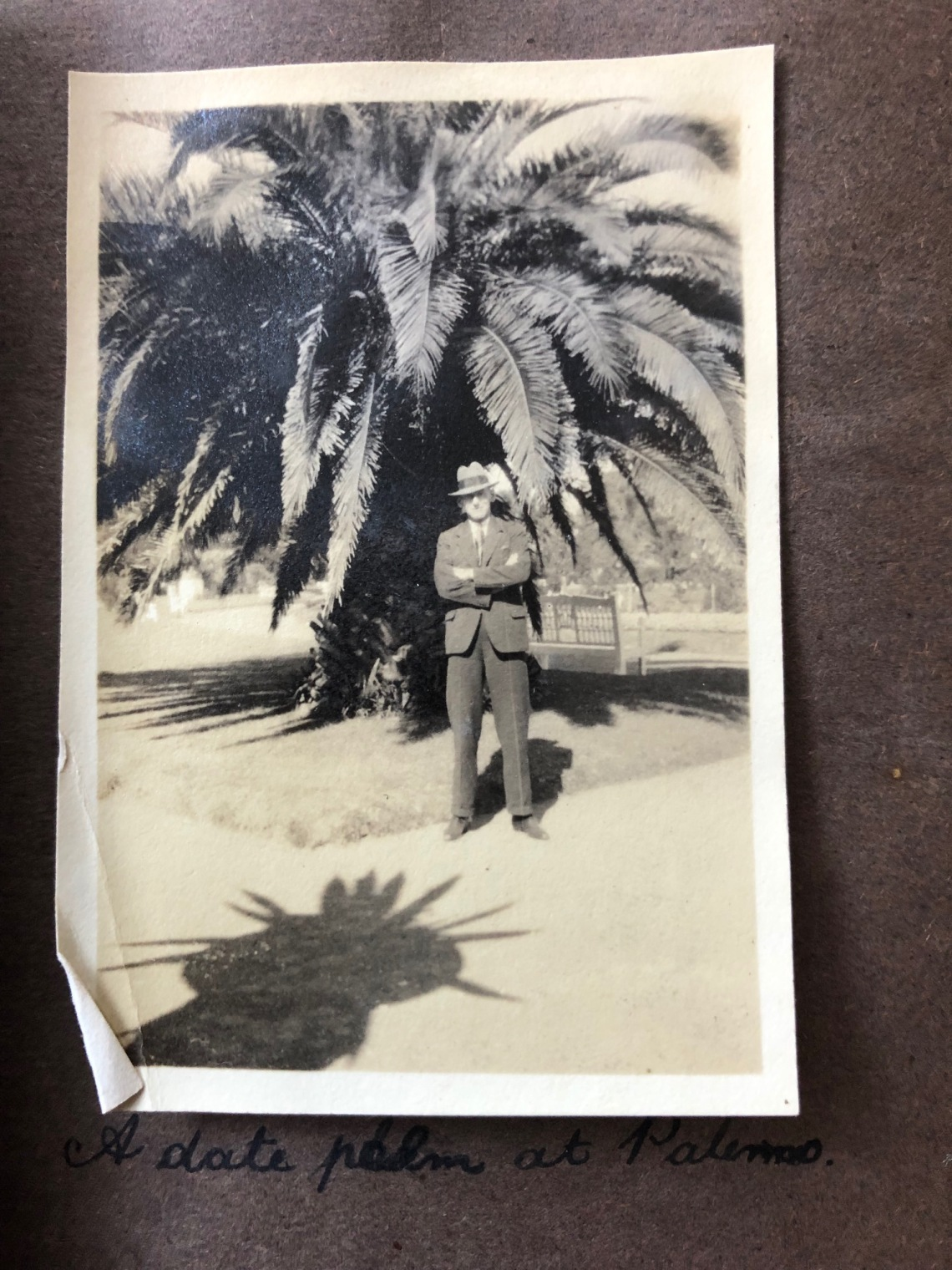 A Date Palm at palermo